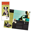 Veterinarian Brochure Design